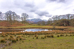 The Mountains are Calling and I Must Go (StevePilbrow) Tags: great langdale beck national trust river brathay lake district park cumbria lakes north west england country side water walking elter elterwater trees hill pike nikon d7200 nikkor 18105mm march april 2018