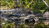 _SG_2018_04_0074_IMG_6757 (_SG_) Tags: usa us florida key west sunshine state united states america island city roundtrip everglades national park american alligator mile nine pond