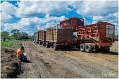 Harvesting Sugar Cane (RudyMareelPhotography) Tags: cuba sugar sugarcane trinidad harvest rural ruraleconomy flickrclickx flickr ngc