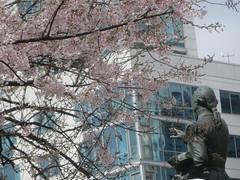 Washington With Blossoms (edenpictures) Tags: unionsquarepark spring flowers blossoms floweringtrees newyorkcity manhattan nyc statue sculpture georgewashington