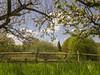 Bough Beech Oast (Gareth Christian) Tags: sonydschx90v kentwildlifetrust boughbeech kwt orchard apple blossom oasthouse oast nature tree appletree
