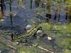making noise (Paramedix) Tags: frog frosch animal tier nature natur tübingen germany deutschland badenwürttemberg