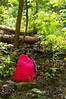 Stiefern (Harald Reichmann) Tags: niederösterreich stiefern wald frühling stein markierung farbe zeichen alltagskunst