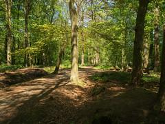 Licht (Geziena) Tags: bomen boom bos licht schaduw natuur asserbos assen