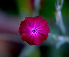 Va a llegar la primavera, por Dios. (angelalonso57) Tags: canon eos 6d tamron sp 90mm f28 di vc usd macro11 f004 ƒ28 900 mm 1200 200 flor flower flowers nature natura natural naturalmente las flores de mi galeria