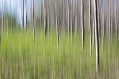 spring forest (sami kuosmanen) Tags: suomi kuusankoski kouvola nature europe luonto light intentionalcameramovement icm landscape long puu pitkä abstract exposure expression valo valotus värikäs taivas tree