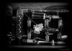 - Labor Improbus - (claudiov958) Tags: biancoenero blackwhite blancoynegro černýabílý claudiovaldés czarnyibiały flower mediumformat mediumformatcamera mediumformatdigital noiretblanc pentax645z pretoebranco schwarzundweiss studio tabletop черноеибелое hdpentaxda6452845mmf45edawsr glass laboratory