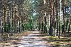 Волинський ліс Лісова дорога InterNetri Ukraine 0071821907