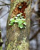 Log. (Gillian Floyd Photography) Tags: tree moss lichen plants