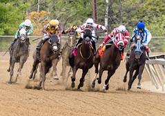 2018 Pimlico Race track (60) (maskirovka77) Tags: pimlico dirt mare race racehorse threeyearold turf yearling