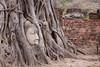 The ancient Buddha in the nature (Ming_Young) Tags: buddha ancient tree ayutthaya watmahathat sukhothai thailand thai southeastasia bodhitree