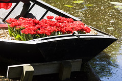 tulip boat (my lala) Tags: blossom keukenhof spring holland netherlands flowers colorful nature tulip boat