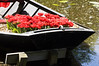 tulip boat (my lala) Tags: blossom keukenhof spring holland netherlands flowers colorful nature tulip boat