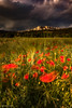 sunset on poppies - Sainte Victoire (lhags2000) Tags: canon vanguard benro formatthitechfilters poppy flower sunset saintevictoire paca storm