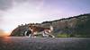Race to sunset (romanhrbek) Tags: sony alpha a6500 sigma ronny mickey dog bordercollie sunset road sky brno race 16mm colours backround sun grass fight doginaction run action