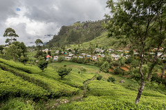 Local village in the Dambatenne tea plantation (Tim&Elisa) Tags: srilanka asia canon landscape nature dambatenne dambatenneteaplantation tea teaplantation green clouds haputale village