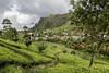 Local village in the Dambatenne tea plantation (Tim&Elisa) Tags: srilanka asia canon landscape nature dambatenne dambatenneteaplantation tea teaplantation green clouds haputale village