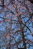 20180420.030 (FOTOGRAFIA.Nelo.Esteves) Tags: 2018 usa us unitedstates nj newjersey monmouthcounty holmdel park nature spring blossoms