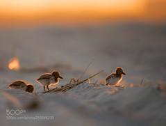 Chicks (KevinBJensen) Tags: seabird flock birds water bird sea waterfowl seagulls seagull lake royal tern iceberg ice floe coldness