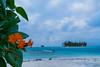 En Perspectiva - Archipiélago de San Blas (carlosbenju) Tags: naturaleza nature verde green playa plantas beach plants agua water ocean oceano mar sea colores colors islas islands isla island palmera palm coco coconut azul blue panama
