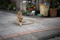 猫 (fumi*23) Tags: ilce7rm3 sony 55mm sonnartfe55mmf18za sel55f18z feline cat gato katze neko a7r3 emount animal miyazaki bokeh dof ねこ 猫 ソニー 宮崎