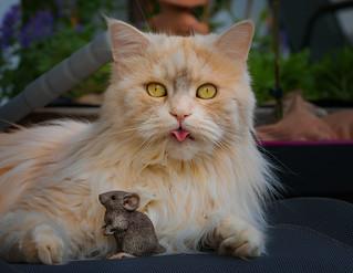 Naa-na na-naa-na ! Mousie loves me more than you !