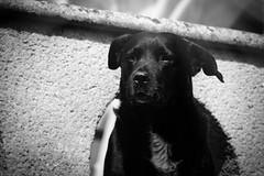 _PIC5947 (kryztophe) Tags: dog