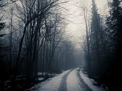 nokia mist fog winter wet water snow tracks trees... (Photo: Blia100 on Flickr)