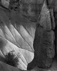 The Obelisc (Furcletta) Tags: brycecanyon usa utah southwest 70200mm28gvrii white sandstone landscape fragment shadow erosion blackwhite sand rock formation bush outdoor handheld nikond800