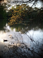 883 (a.pierre4840) Tags: olympus omd em5 cmount micro43 schneider kreuznach xenon 25mm f095 vignetting lake bird trees reflection reflections universityofreading reading berkshire england nature