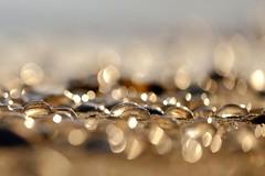 Catch the bokeh (peeteninge) Tags: catchthebokeh smileonsaturday jellyfish beach sand bokeh nature kwalletjes strand natuur fujifilmxt2 fujifilm xf80mmf28