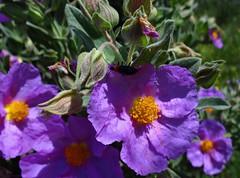 Colores de primavera. (Caty V. mazarias antoranz) Tags: nature naturaleza primavera mayo colores multicolor flowers florido verde spain españa