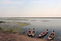 Canoe in Marshes. (Mo.Alsoufi) Tags: canoe iraq marsh boat water mesopotamia