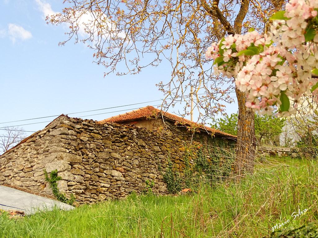 Águas Frias (Chaves) - ... ramo florido e traseira de uma casa ...