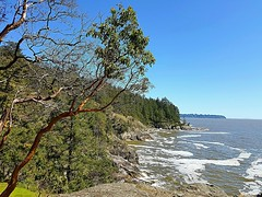 Looking towards English Bay (walneylad) Tags: lighthousepark pointatkinson westvancouver britishcolumbia canada park parkland woods woodland forest rainforest urbanforest tree trees rock rocks water sea ocean pacificocean howesound bowenisland may spring sun bluesky waves beautiful seascape landscape view scenery nature