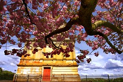 Hamilton Mausoleum Cherry Blossom (matthewblackwood10) Tags: hamilton mausoleum cherry blossom branch sky petals trunk tree clouds building stonework fence scotland uk