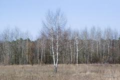Волинський ліс Лісова галявина InterNetri Ukraine 1707739642
