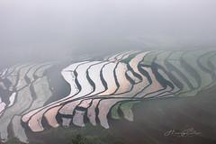 _U1H1381,0617 Lao Chải,Mù Cang Chải, Yên Bái. (HUONGBEO PHOTO) Tags: mùađổnước ruộngbậcthang yênbái mùcangchải laochải asian vietnamscenery vietnamlandscape countryside view abstract terraces highland outdoor