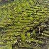 tracks (vertblu) Tags: tracks tractortracks moss mossy floor ground soil green abstractfeel almostabstract vert vertblu diagonal bsquare 500x500 kwadrat pattern patterning patterned patterns