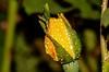 ... den grossen Regen überstanden (gabrieleskwar) Tags: outdoor rose farbe gelb grün blätter wasser wassertropfen makro blumen blüte