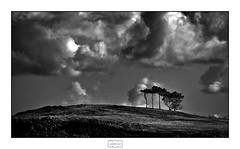 Árboles/ Trees (Jose Antonio. 62) Tags: spain españa asturias candás clouds nubes arboles trees bw blancoynegro blackandwhite