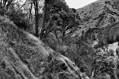 Wildflowers and Trees on the California Hillsides (Black & White) (thor_mark ) Tags: alongcentralyosemitehwy blackwhite californiastateroute140 capturenx2edited centralyosemitesierra colorefexpro daisies day7 fergusonridge fieldofdaisies fieldofyellowwildflowers fieldofyellowwildflowersonhillside hillsideoftrees landscape lookingnw mountainvalley mountains mountainsindistance mountainsoffindistance nature nikond800e outside overcast pacificranges portfolio project365 roadsidestop rollinghillsides sr140 sierranationalforest sierranevada silverefexpro2 stateroute140 trees triptopasoroblesandyosemite westyosemitefoothills yosemiterittersierranevada california unitedstates