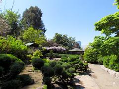 Verde (0_miradas_0) Tags: jardín japonés parque metropolitano árbol arbustos planta naturaleza cielo ciudad santiago chile