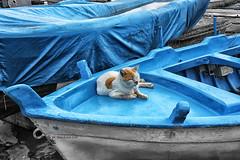 il riposo (Gina.Di) Tags: mondello sicilia palermo gatto barca mare italia italy