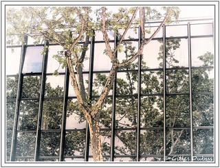 Un arbre et des reflets