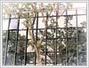 Un arbre et des reflets (GilDays) Tags: france cahors occitanie lot so0518 arbre tree reflet reflection quercy vert green olympus em1markii em1 olympusomdem1 olympusem1 midipyrénées