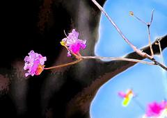 Spring time (ashokboghani) Tags: spring digitalart digitalpainting photoshop photoshopart