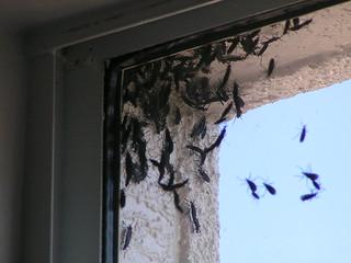 Lovebug Swarm 1