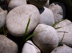 Rocks (Argelia Castaeda) Tags: naturaleza nature garden gris rocks uniform gray forms formas rocas jardn uniformas
