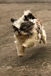puppy in flight